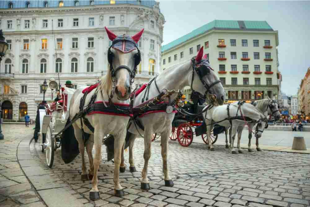 Fiaker in Vienna in Austria
