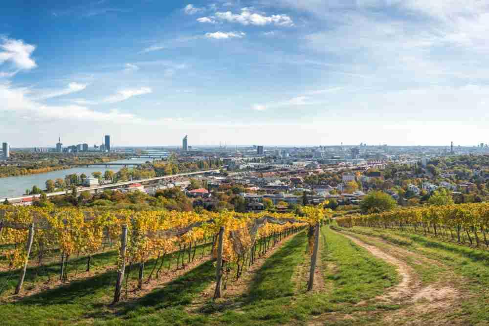 Weingärten am Stadtrand in Vienna in Austria