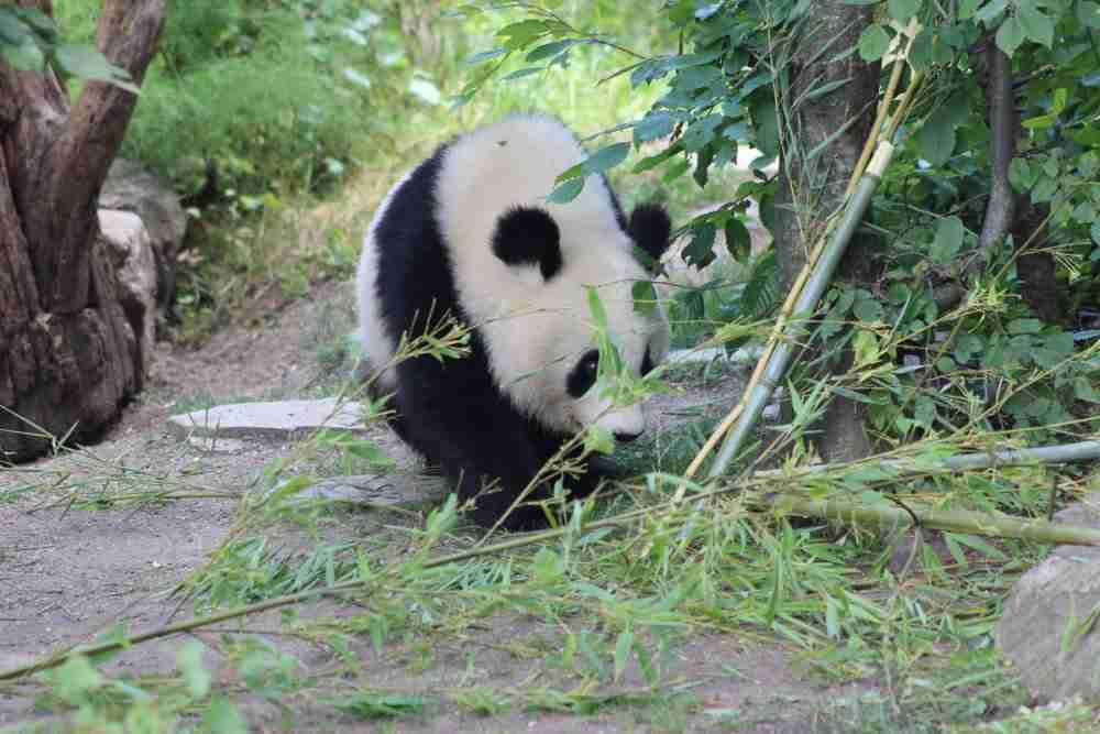 Welche Tiere kann ich im Tiergarten Schönbrunn sehen