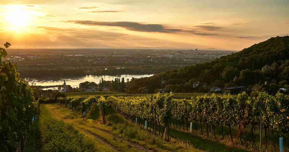 12 schönsten Heurigen in Wien